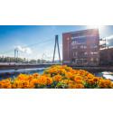 Tampereen Kukkaisviikot alkavat huomenna - uudistuneessa kaupunkijuhlassa ennätysmäärä tapahtumapaikkoja ja ohjelmaa