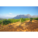 Cap Classique Metoden: Sør-Afrikas svar på champagnemetoden