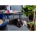 """Vor, während und auch nach Corona: """"Kollege Hund"""" sorgt auch im Büro für Struktur und Entspannung."""