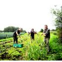 Engagiert für eine gesunde Erde: Klima, Resilienz und Gesundheit sind Themen der Sektion für Landwirtschaft
