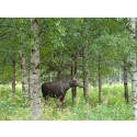 Wildnisauszeit in Schweden mit der Natur- und Wildnisschule Teutoburger Wald
