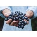 Værd at vide om Riesling vin