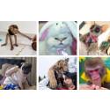 Gewalt gegen Tiere: WTG fordert Änderung des Strafgesetzbuches, um verherrlichende Darstellungen von Tierleid zu unterbinden