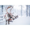 Visit Rovaniemi partners with HUAWEI Themes to spread Christmas spirit