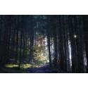 Online-Vortrag: Wald(um)bau und Baumartenwahl