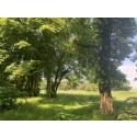 Naturperle: Frejlev Skov - gravhøje, drab, en fornøjet konge og velbevaret natur