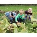 Dyrk framtida: Slik lærer du elevene dine å dyrke mat