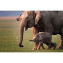 Stop the torture & abuse of Asian Elephants for UK tourists' fun