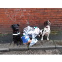 Billy and Ted's excellent adventure – sniffing out illicit tobacco!
