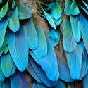 Feathers - fjädrar