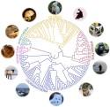240 däggdjurs arvsmassa analyserad