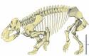 Rekonstruktion av Lisowicias skelett