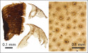 Mikroskopiska kroppsdelar
