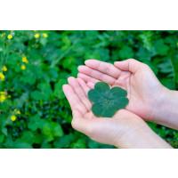 KommuneKredit's Green Bond Committee approves DKK 3.1 billion in green loans