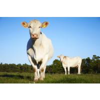 Ny undersökning: Åtta av tio väljer bort importerat kött för klimatets skull