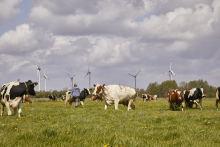 Arla Foods CSR-Bericht 2020: Arla beschleunigt Nachhaltigkeitsmaßnahmen