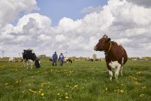 Mehr Geld für Landwirte: 264 Mio. Euro gehen an Arla Milchbauern - 1,75 Eurocent pro kg Milch Nachzahlung für 2020