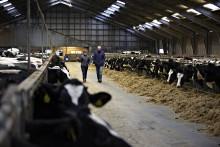 Arla-Genossenschaften fit für die Zukunft - Hansa Arla Milch und MUH Arla blicken auf erfolgreiches Geschäftsjahr zurück