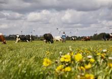 Arla Klimacheck: Big Data ermöglicht Landwirten eine schnellere Senkung der CO2e-Emissionen