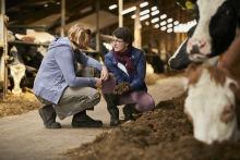 Nachhaltige Milchwirtschaft: Bereits 90 Prozent der Arla Genossenschaftsmitglieder nehmen am neuen Arla Klima-Check-Programm teil