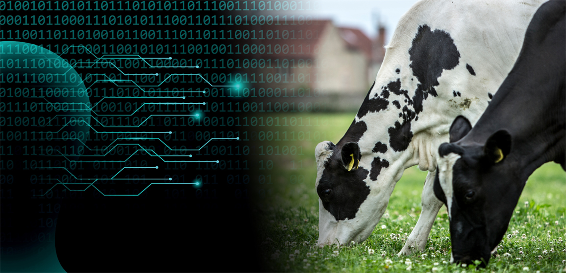 New artificial intelligence tool predicts how much milk 1,5 million cows will produce
