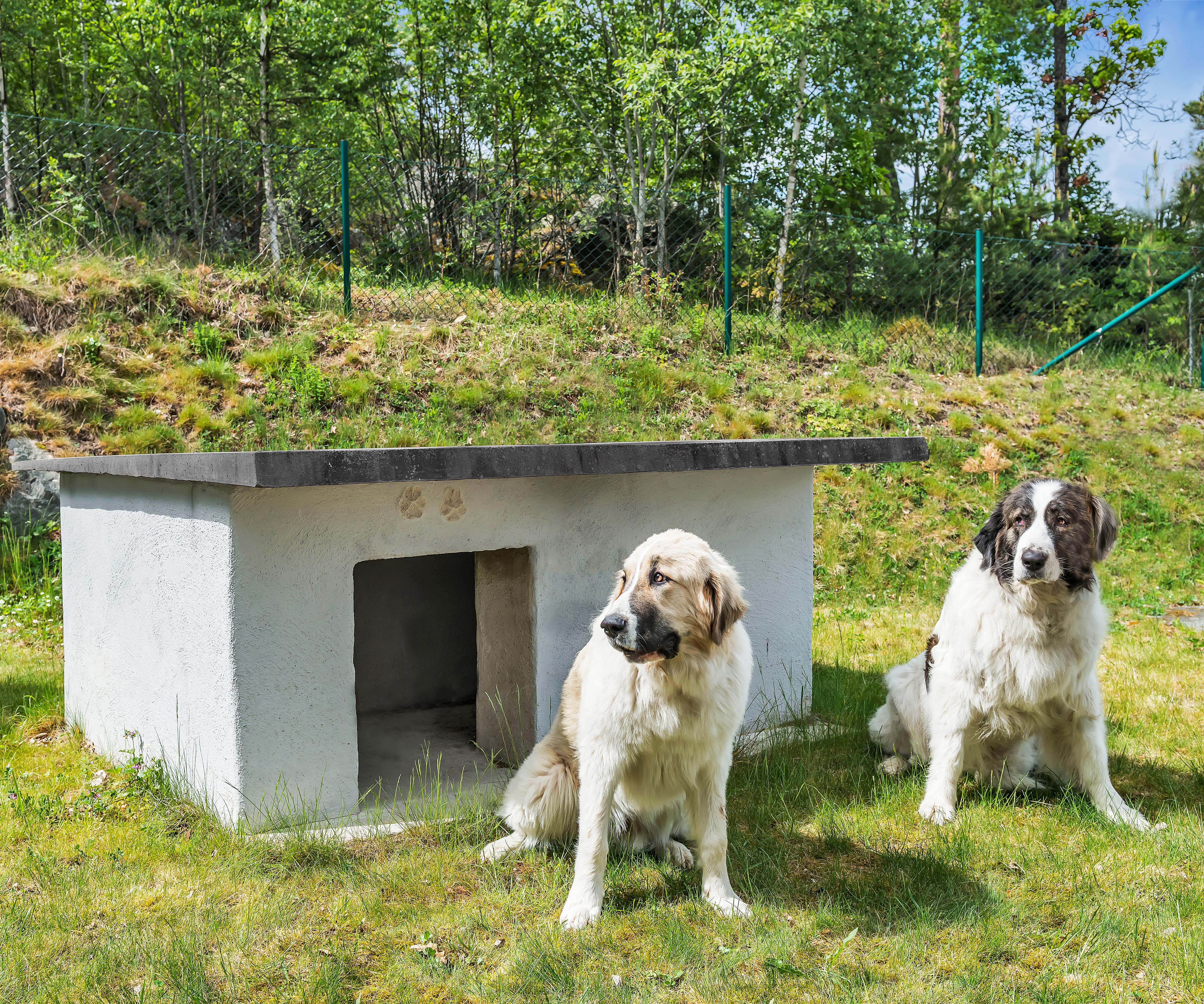 Bygg et isolert hundehus i betong 1